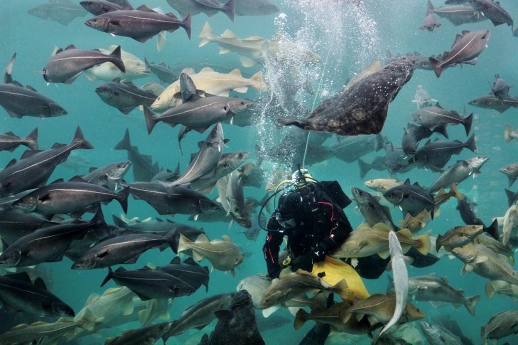 Tauchershow im Atlanterhavsparken